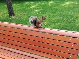 un écureuil marron