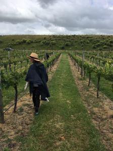 Natchou travaille dans les vignes